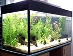 Освещение аквариума (подсветка)