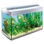 Как выбрать аквариум и куда поставить аквариум в квартире