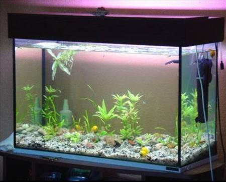 С черным клеем у вас получится вот такой аквариум