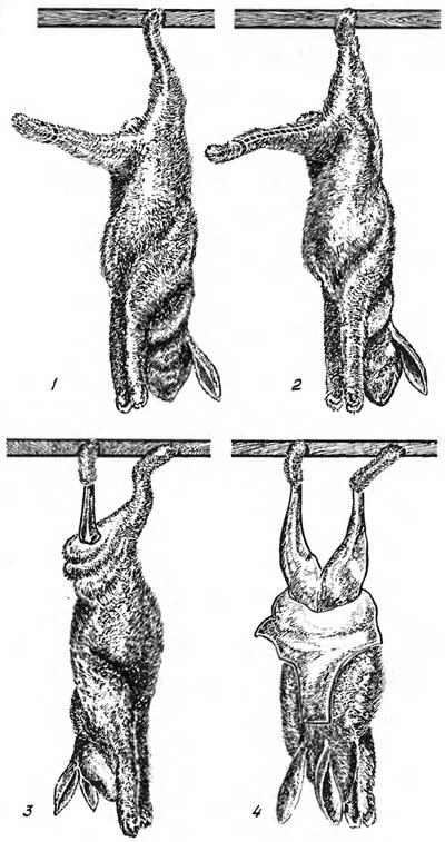 отложения жира, сухожилия.