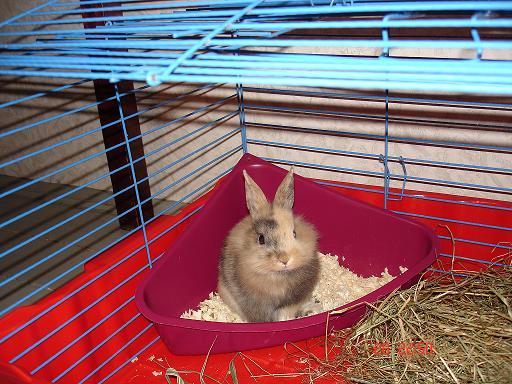 Как сделать туалет для кроликов