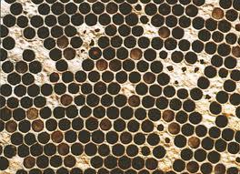 Болезни пчёл и их лечение