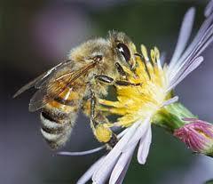 Корм для пчел